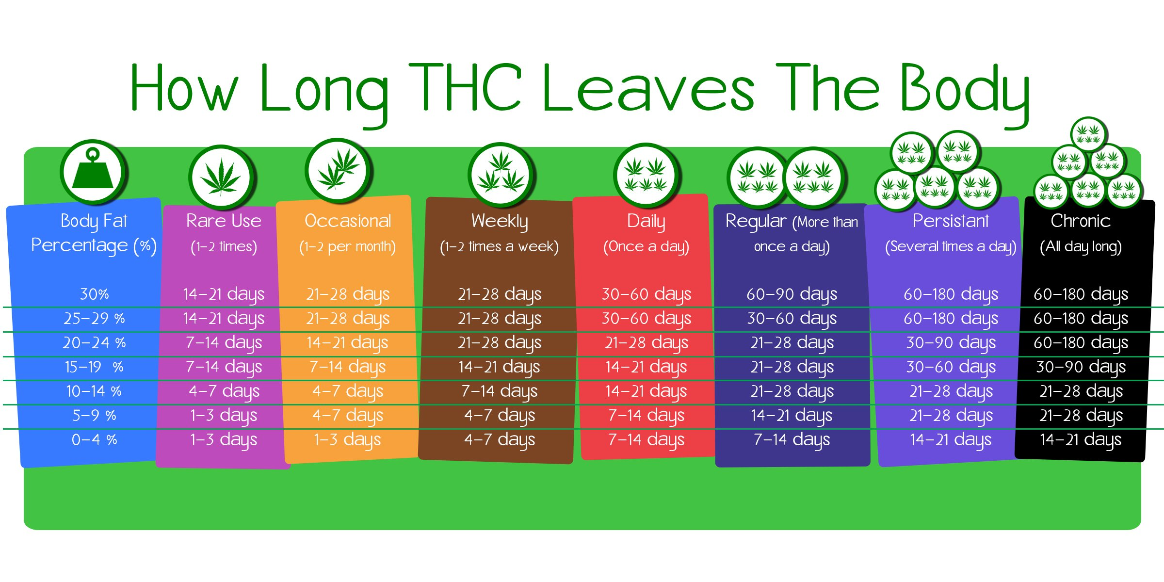 How Long THC Leaves The Body