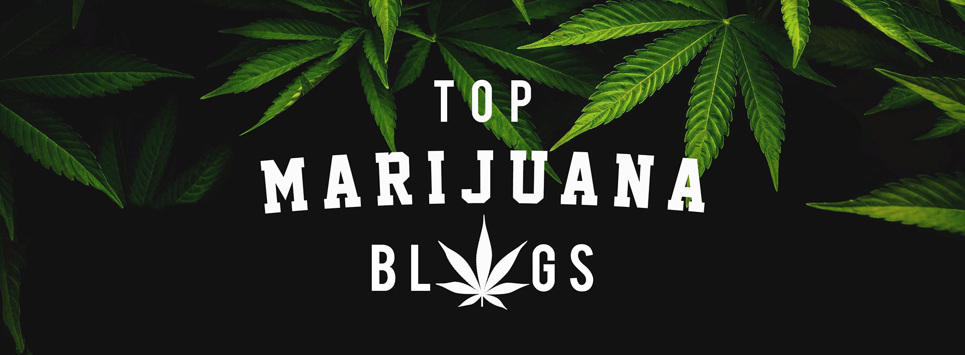 Top Marijuana Blogs